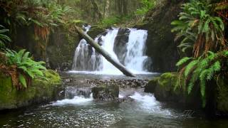 Download The Forest Waterfall HD - The Calming Sound of Water Video