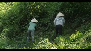 Download Boosting income and forest cover in Viet Nam Video