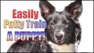 Download How to Potty Train & Crate Train a Puppy OR Dog HUMANELY and EFFECTIVELY! Video