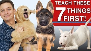 Download How to Teach The First 7 Things To Your Dog: Sit, Leave it, Come, Leash walking, Name...) Video