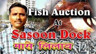 Download Fish Auction at Sasoon Dock at wholesale rates Video