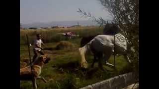 Download Naxcıvan. Atlarin doyusu (horses fighting) Video