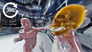 Download 360 Video - Boxing Injuries: What Happens Inside the Human Body in a K.O.? Video