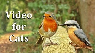Download Videos for Cats to Watch - Birds on The Fence Extravaganza Video