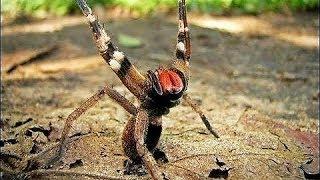 Download 17 DEADLIEST Animals in the Amazon Video