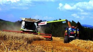 Download Harvest wheat-Žně pšenice 2014 (Class Lexion 760 TT) *HD 1080p* Video