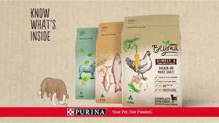 Download PURINA BEYOND® Dry Dog Video
