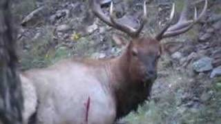 Download NEW MEXICO BULL ELK BOW HUNT Video