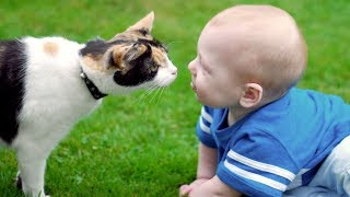 Download Cats and Dogs Meeting Babies for the First Time (2017) Video