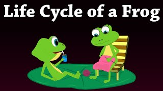 Download Life Cycle of a Frog | #aumsum Video