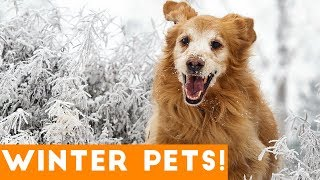 Download Funniest Winter Pet Video Compilation December 2017 | Funny Pet Videos Video