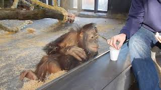 Download Monkey Sees A Magic Trick Video