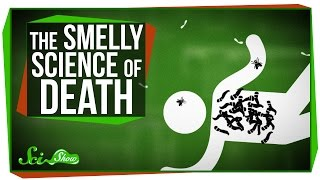 Download The Strange, Smelly Science of Decomposing Bodies Video