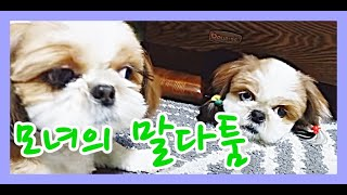 Download 로또,쎄미,..모녀의 말다툼~~:[Shih Tzu , 시츄 ,로또 ] Video