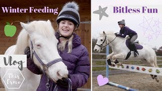 Download Vlog | Winter Feeding, Mickey walks, Bitless fun + Hay Steamer | This Esme Video