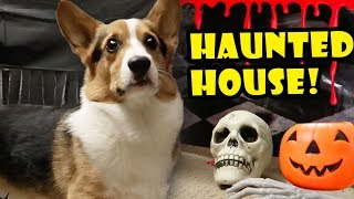 Download CORGI HAUNTED HOUSE! - Spooky Halloween Tunnel || Life After College: Ep. 568 Video