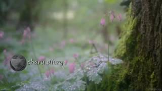 Download অসাধারণ একটা গল্প - charu diary Video