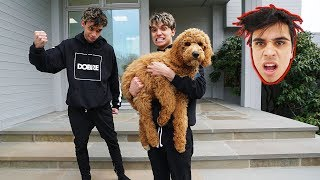Download WE STOLE OUR BROTHER'S PUPPY! Video