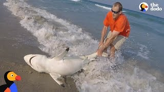 Download Top 5 Animal Rescues at Sea | The Dodo Video