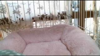 Download ジャンくんミーティング 保護猫はみんな元気 第1部 LIVE STREAM Video