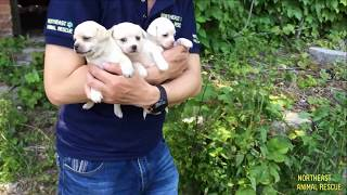 Download Rescue Puppies Who Lost Their Mom in an Abandoned Factory - Dog Rescue Action Video