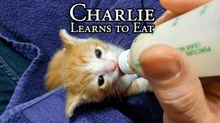 Download Charlie Learns to Eat Video