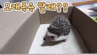 Download 고슴도치도 모래 목욕을 한다는거 알고계셨나요? : 고슴도치 키우기 Video