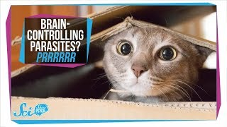 Download Toxoplasmosis: How Parasites in Your Cat Can Infect Your Brain Video