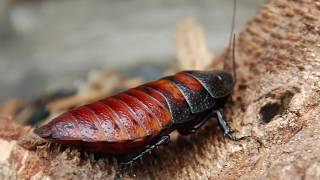 Download 10 Most Intelligent Insects In The World Video
