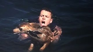 Download Baby Deer Found Miles Off-Shore Swimming for Life Video