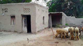 Download Pakistani Punjab Rural Village Life Rare Video Video