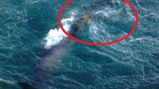 Download Amazing Mermaid Pictures Taken Off Greek Island By Fisherman Video