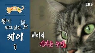 Download 고양이를 부탁해 - 왕이 되고 싶은 묘(猫), 레이 #001 Video
