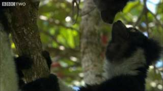 Download Madagascar's Precious Wildlife Is Slipping Away - Madagascar - BBC Two Video