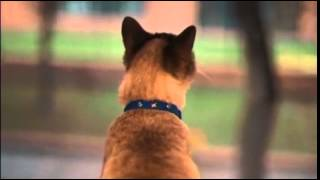 Download Gatomelos PURINA® CAT CHOW® Video