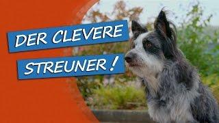 Download bosch | Fruitees - Der fruchtige Hundesnack: Werbespot #2 Video