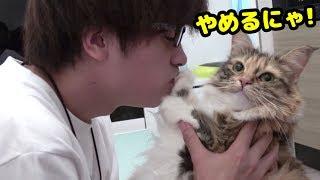 Download 飼主のキスを全力で拒む猫 Video