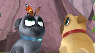 Download Puppy Dog Pals - Bye Bye, Butterfly / A Seat at the Theatre Video