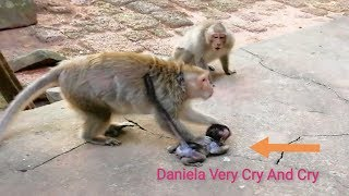 Download Very Break Heart, Baby Monkey Daniela Cry And Cry Very Loudly Because DeeDee Make Wrong To Her Video