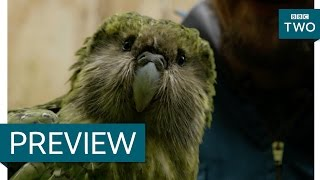 Download Sirocco the flightless parrot and his human brother - New Zealand: Earth's Mythical Islands Video