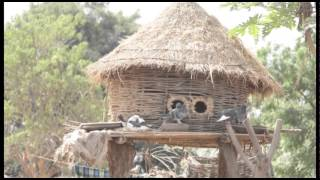 Download The warm heart of Africa. Malawi Video