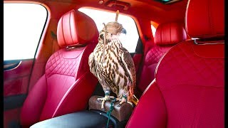 Download Bentayga Falconry INTERIOR Puts Rolls Royce SUV On Notice | Bentley Bentayga Falconry INTERIOR Video