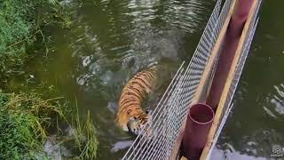 Download Andy's pre- breakfast swim Video