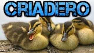 Download Hacer un Criadero de Patos en Casa-Rincon animal Video