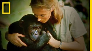 Download Official Film Trailer: JANE   National Geographic Video