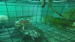 Download Catching Shrimp - Filmed by GoPro Video