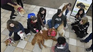 Download Puppy therapy at Pikes Peak Community College Video