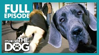 Download The Great Dane 'Villian': Dylan | Full Episode | It's Me or the Dog Video