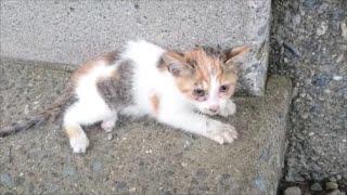 Download 子猫を保護して1年-Rescue a kitten 1 year.【Uzu&Nene channel】ウズネネチャンネル Video
