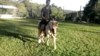 Download ponei pingo sendo montado por eduardo l.P..mp4 Video